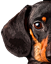 Favicon of https://dachshund-of-dream.tistory.com